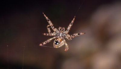 Amazing Facts About Spiders by Schopen Pest Solutions