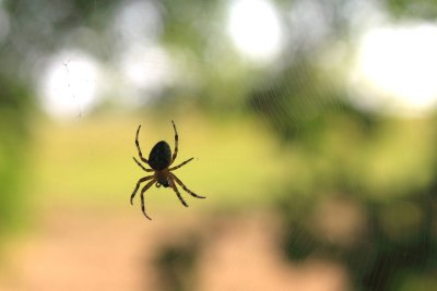 Controlling Growth of Spiders in Illinois
