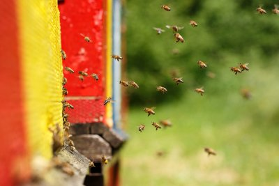 Controlling Wasps and Bees in Illinois
