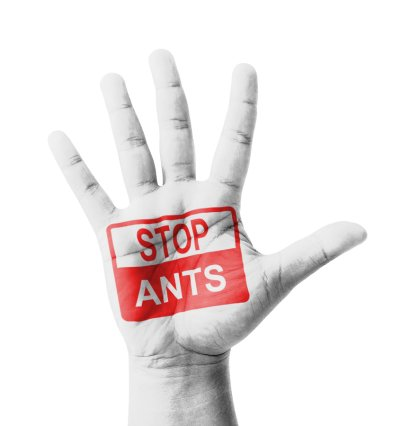 Tips for Keeping Carpenter Ants Away in Illinois