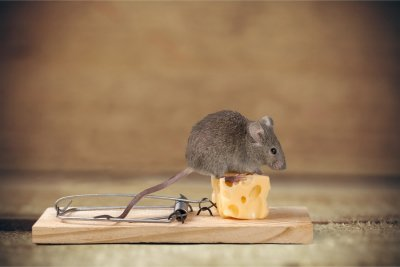 Telltale Signs of a Mouse Infestation in Illinois