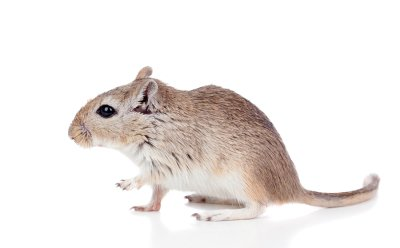Removing Mouse from Your Home in Illinois
