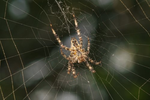 Spider Infestation in Illinois
