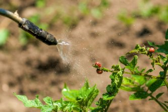 Spraying Pesticides on Plants in Illinois