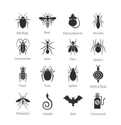 Different Types of Insects in Crystal Lake, IL