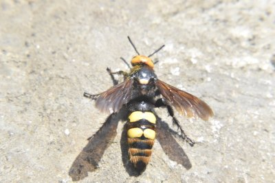 Eliminate Wasp Problems in Crystal Lake, IL