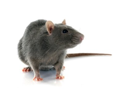Get Rid of Mice in Crystal Lake, IL
