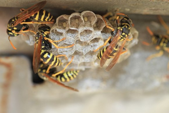 Honey Bee Comb Removal in Crystal Lake, IL