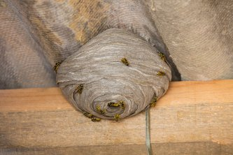 Identifying Wasp Nest in Crystal Lake, IL