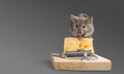 Mice Exterminators at Schopen Pest Solutions