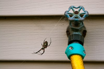 Common Household Spiders in Crystal Lake, IL